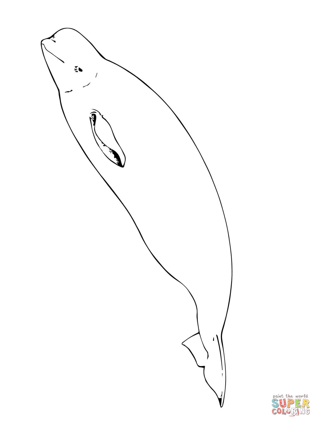 1200x1600 Beluga Whale Coloring Page Free Printable Coloring Pages