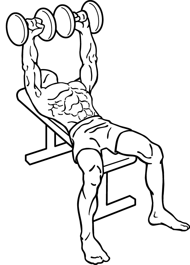 645x900 Filedumbbell Bench Press 1.png