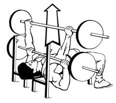 238x212 Flat Bench Press Exercise