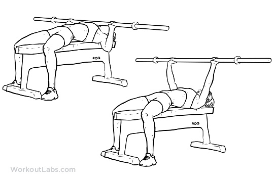 540x360 Barbell Bench Press Chest Press Illustrated Exercise Guide