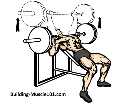437x348 The Incline Barbell Bench Press
