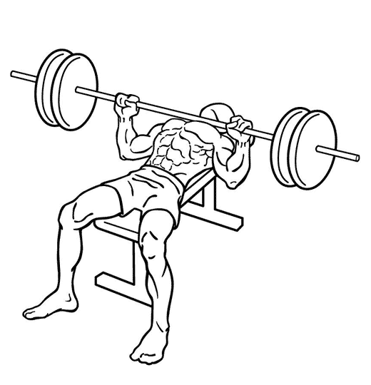 520x540 Bench Press Chest Exercises Exercise Guides