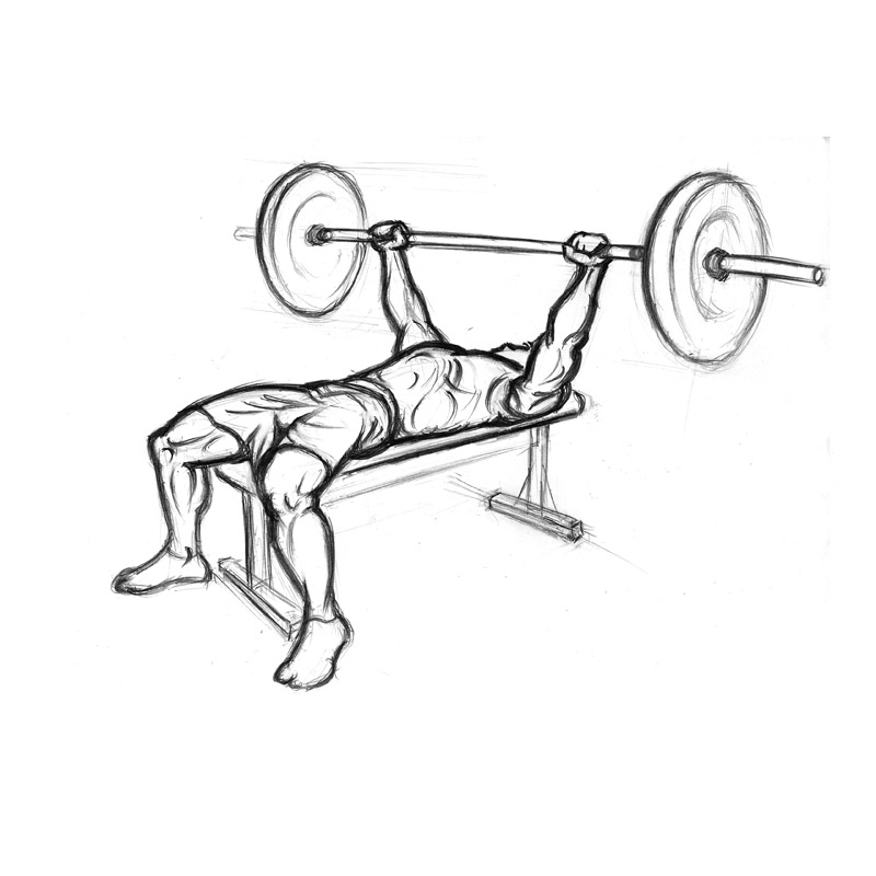 800x800 Chest Exercises Bench Press With Barbell