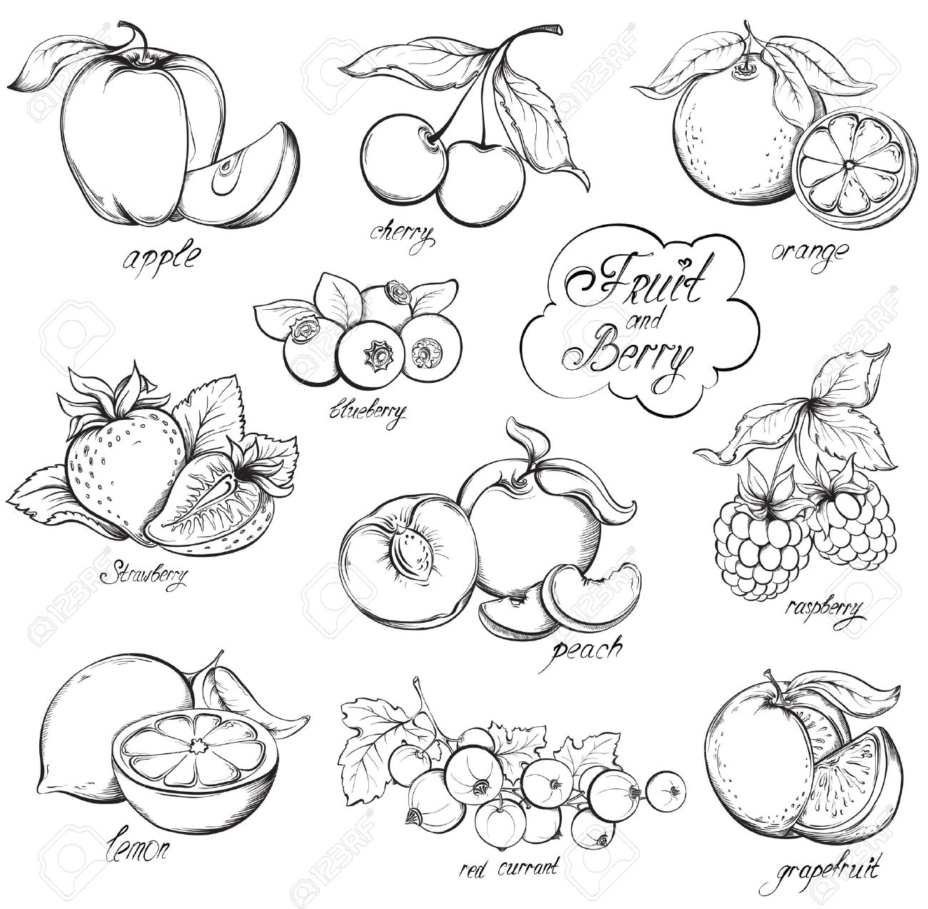 1300x1273 Collection Of Hand Drawn Fruits And Berries Isolated On White
