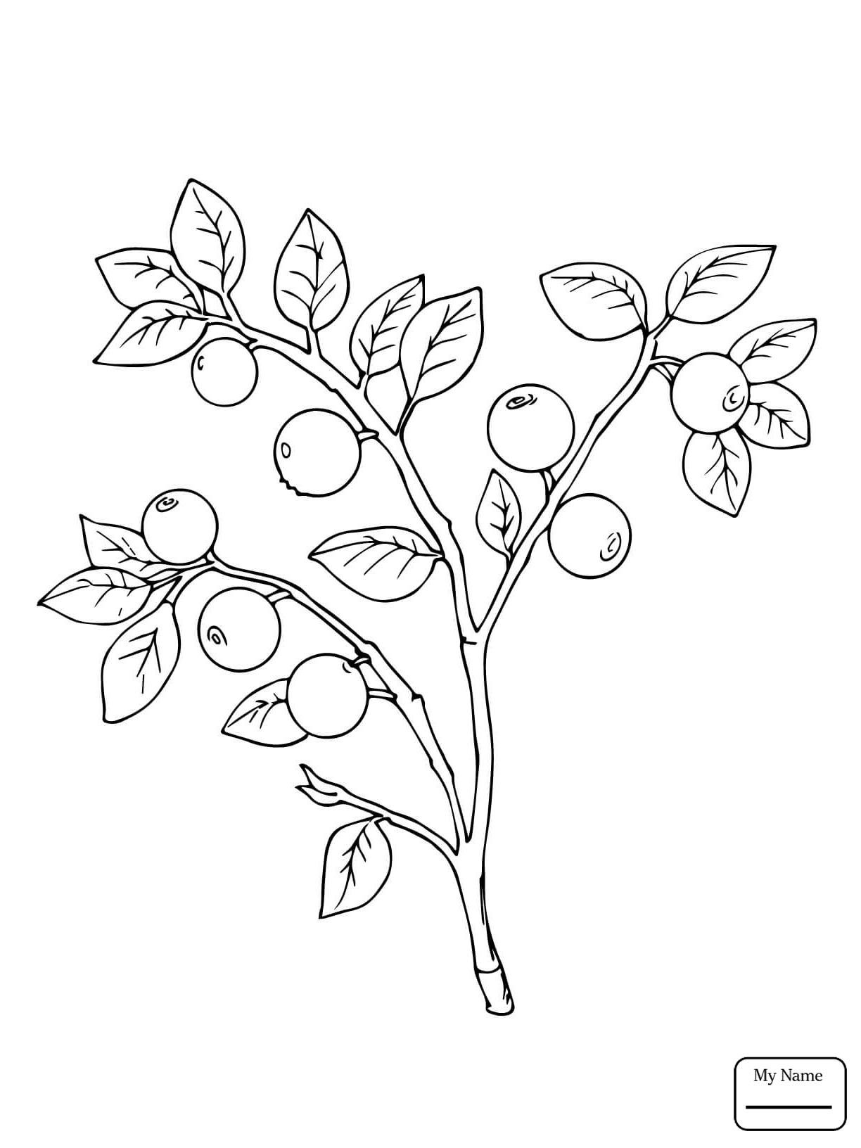 1224x1632 Fruits Berberis Berries Coloring Pages For Kids