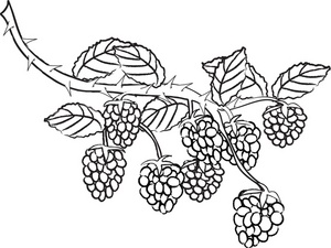 300x225 Free Berry Clipart Image 0515 0906 1201 5347 Food Clipart