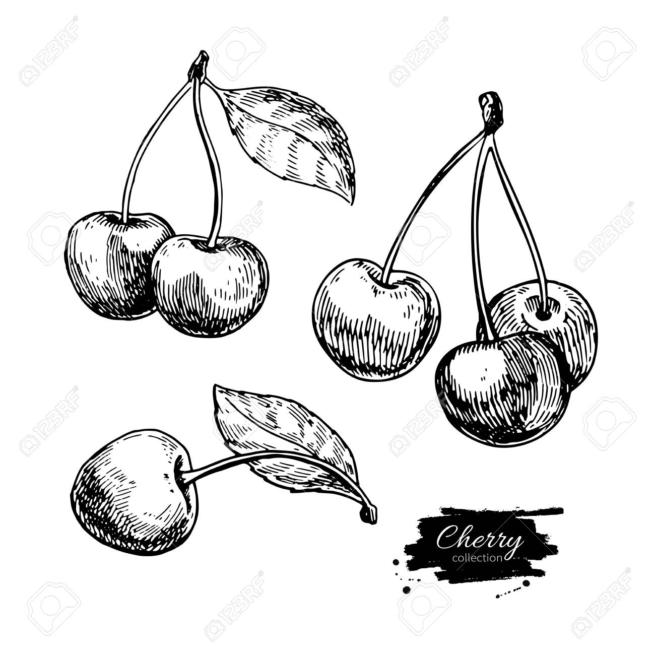 1300x1300 Cherry Vector Drawing Set. Isolated Hand Drawn Berry On White