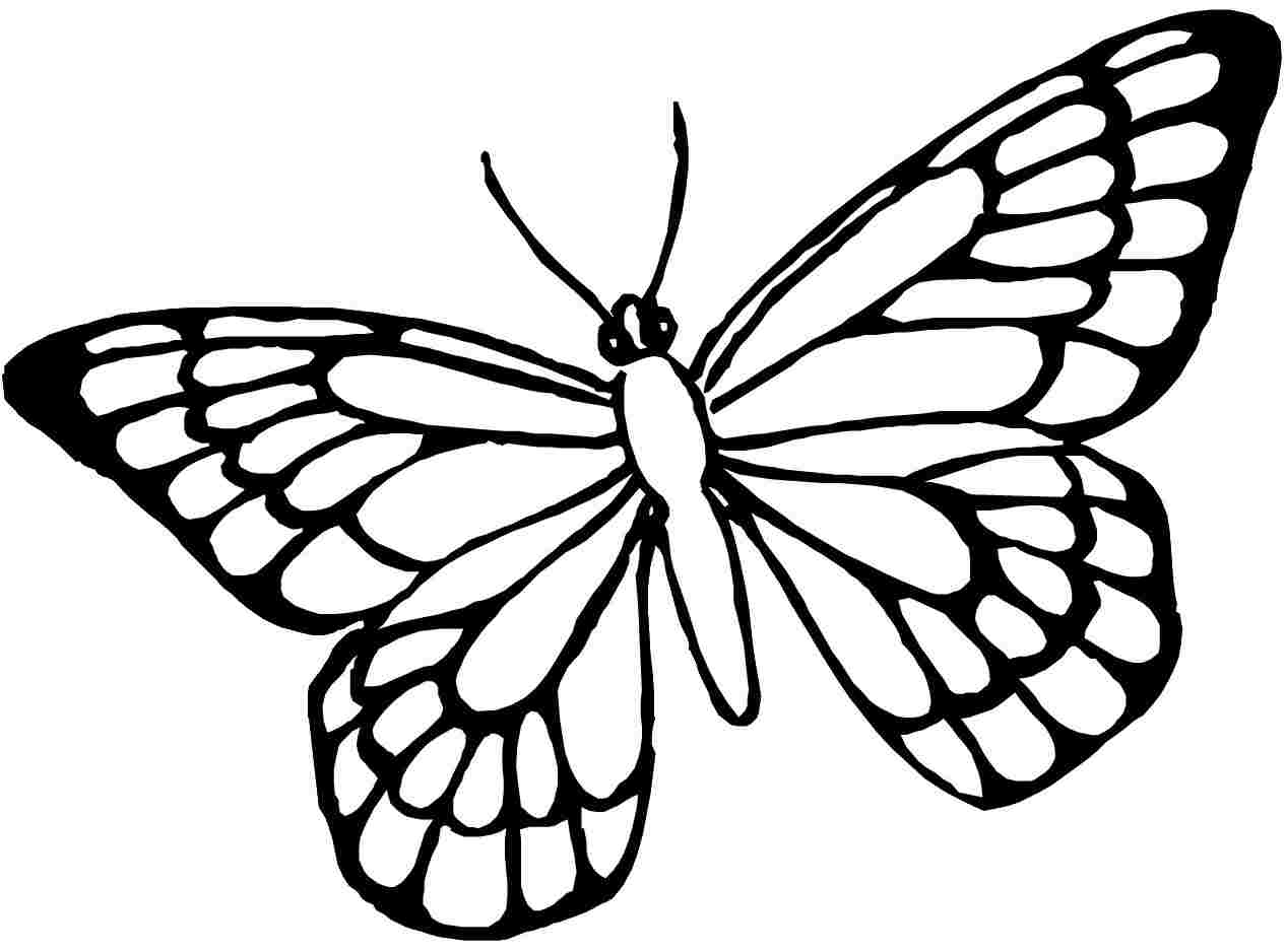 1266x938 World Best Butterfly Drawing With Colours World Best Butterfly