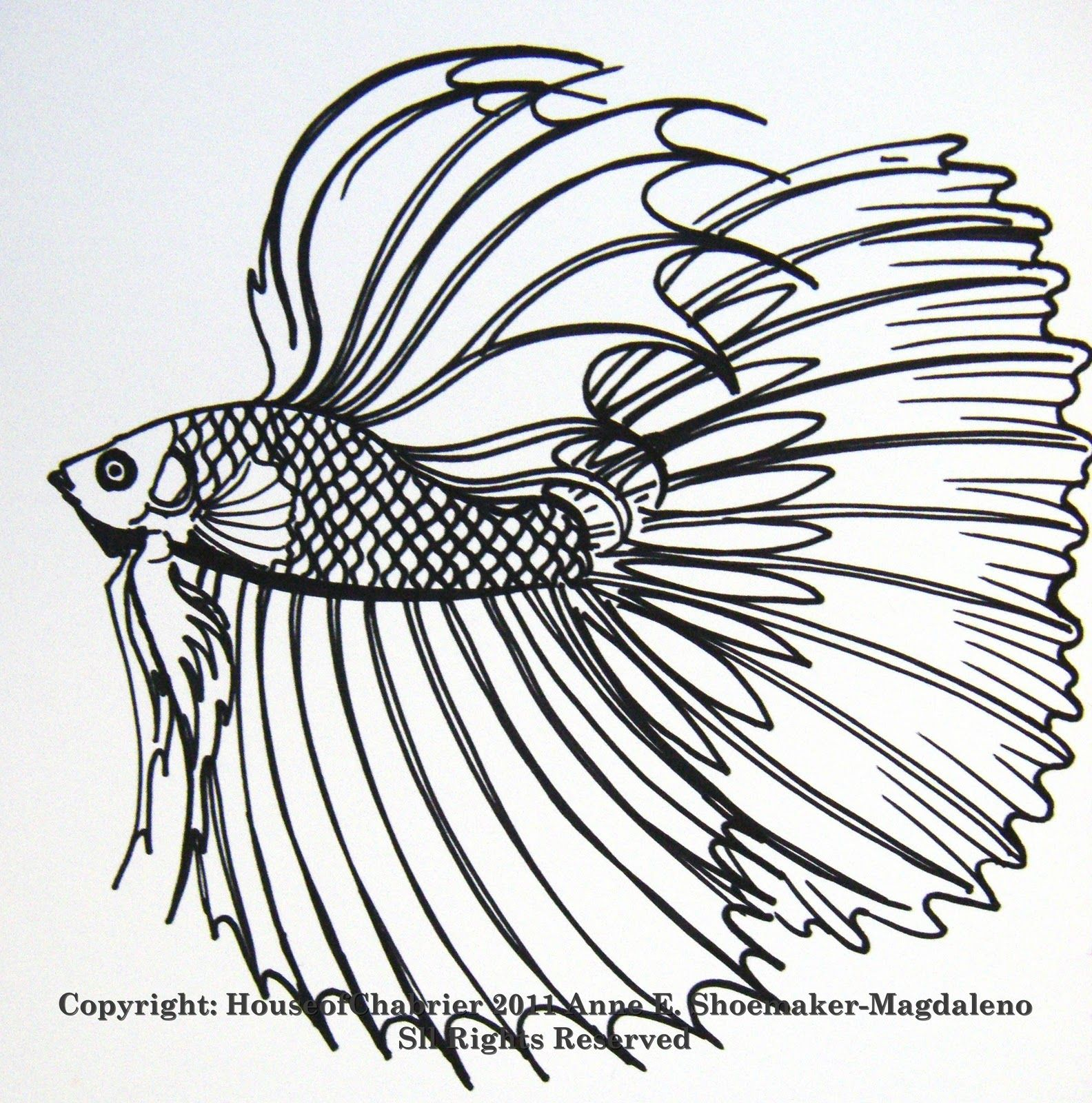1584x1600 Betta Coloring Pages Here Are Some Of My Line Fish Drawings