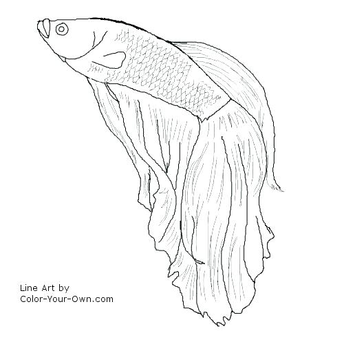 500x500 Betta Fish Coloring Pages Fish Coloring Page Fish Line Drawing