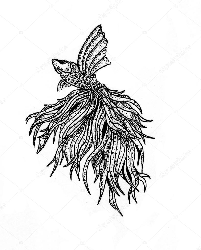 821x1023 Betta Fish Illustration Stock Photo