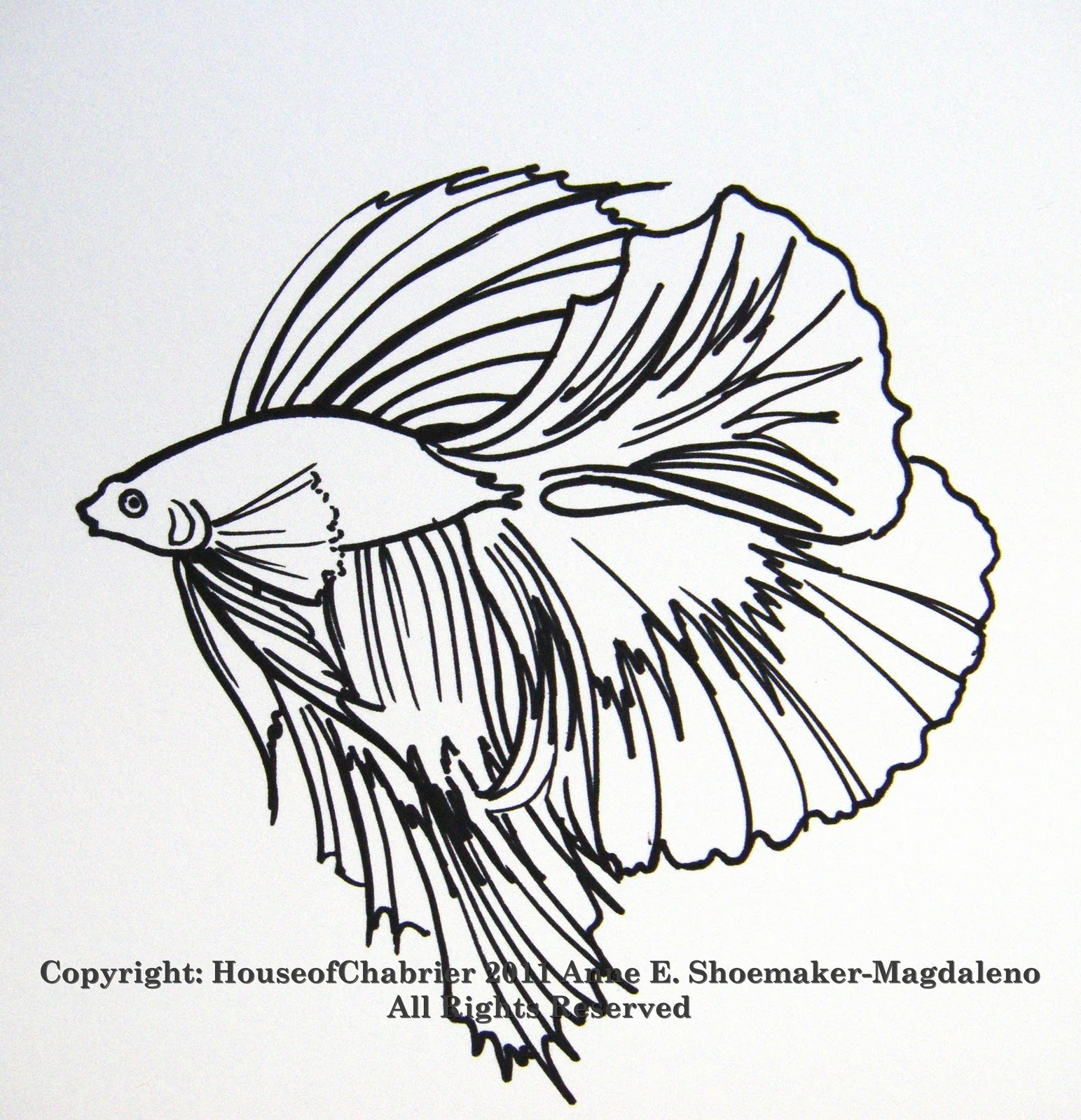 betta fish coloring pages - photo#25