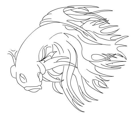 472x404 Drawing Of Betta Tropical Fish Forums