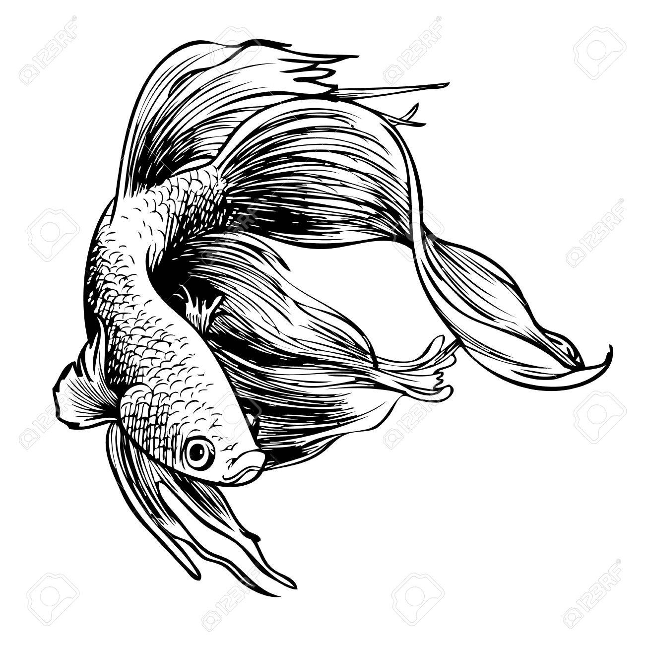 1300x1300 Freehand Sketch Illustration Of Betta Splendens, Siamese Fighting