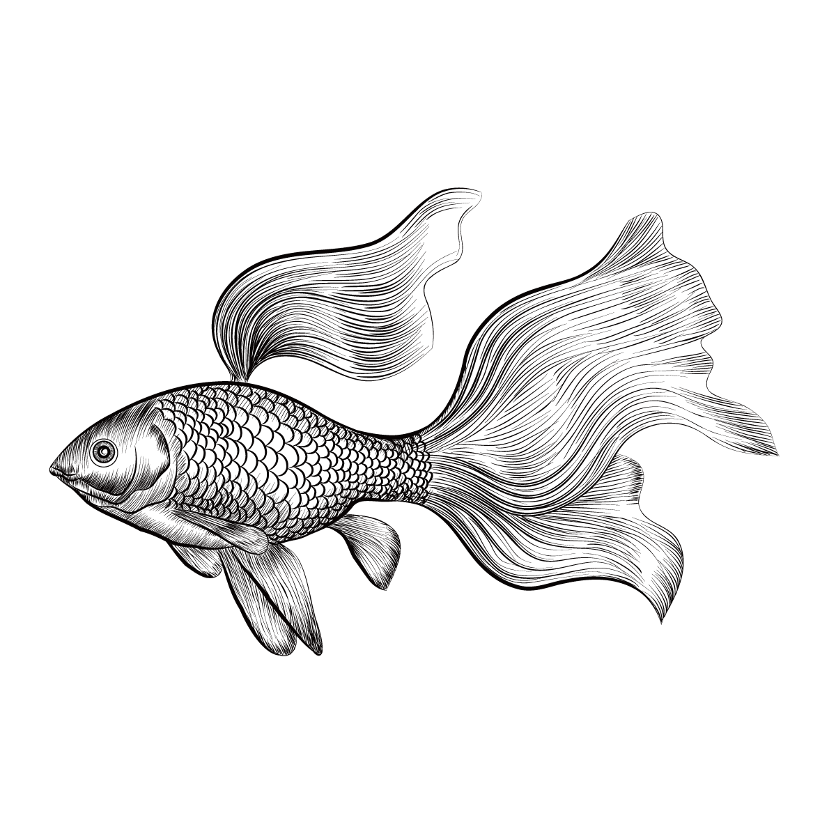 1200x1200 Goldfish Drawing Euclidean Vector