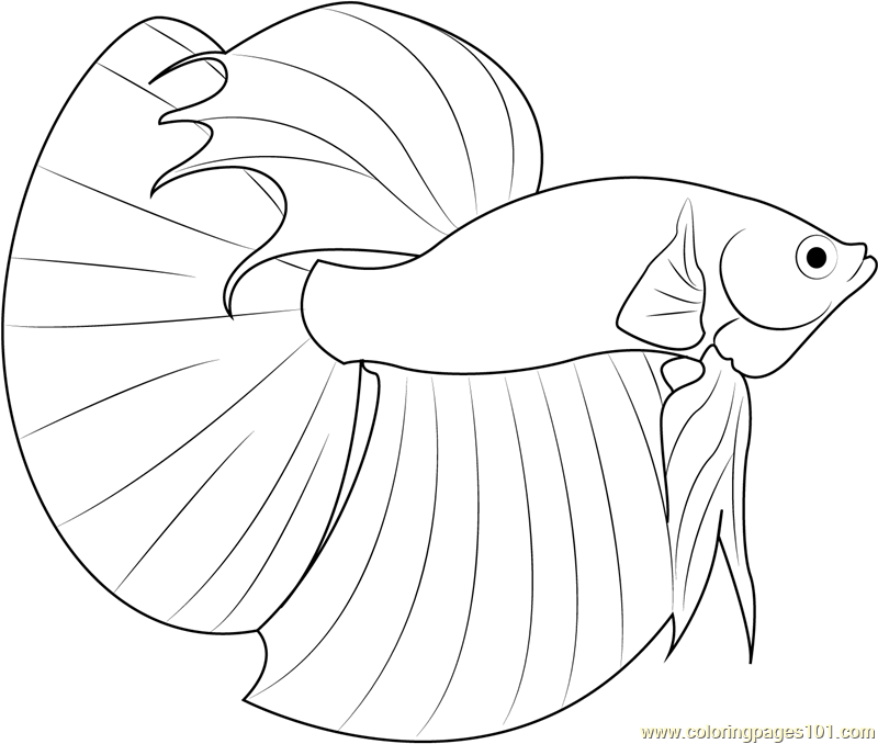 800x678 Betta Fish Coloring Page Coloring Page For Kids