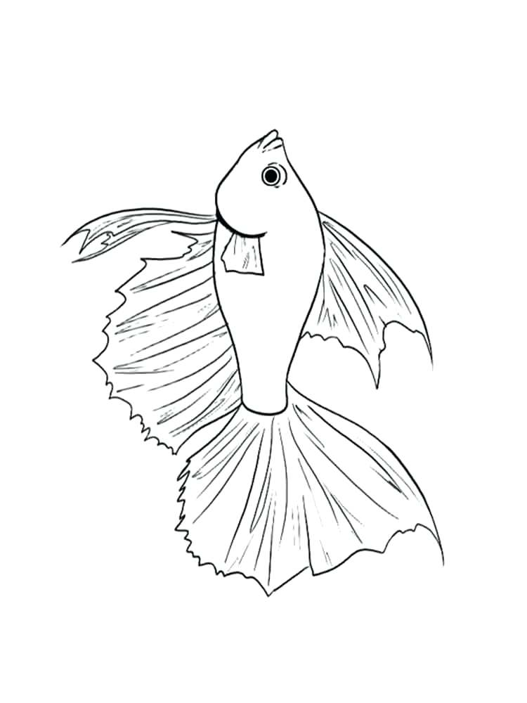 750x1000 Betta Fish Coloring Page