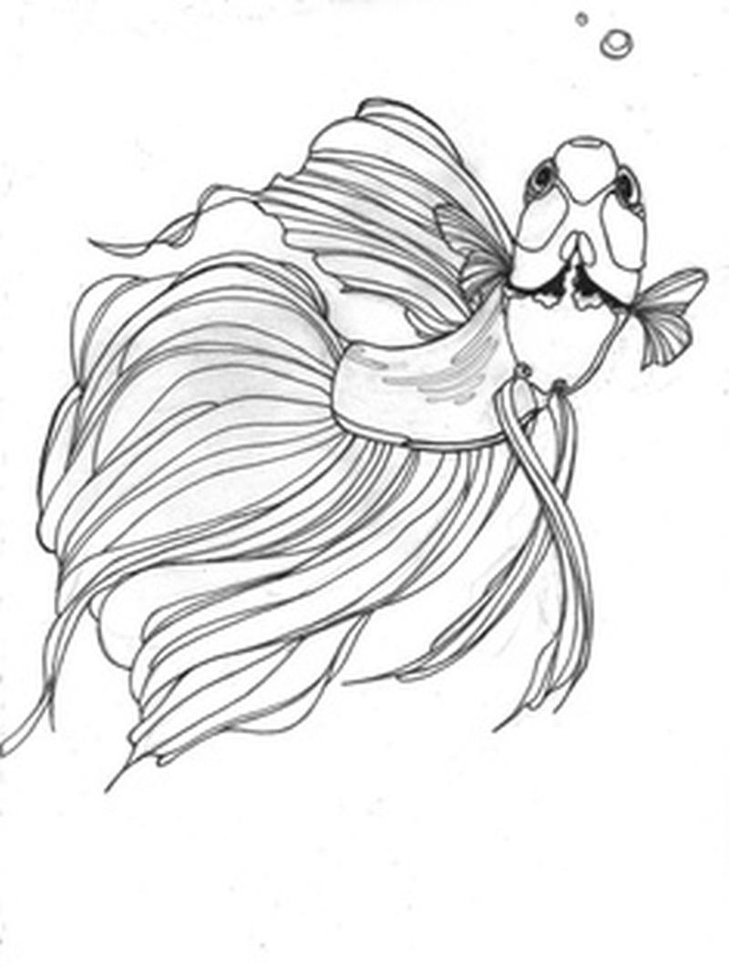 800x1061 Betta Fish Tattoo Sample