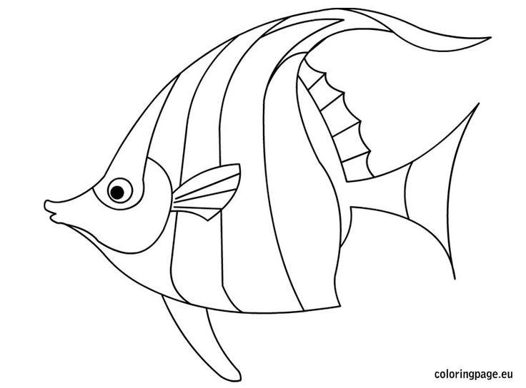 736x544 Drawn Fishing Angelfish