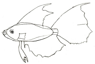 400x271 How To Draw A Fish