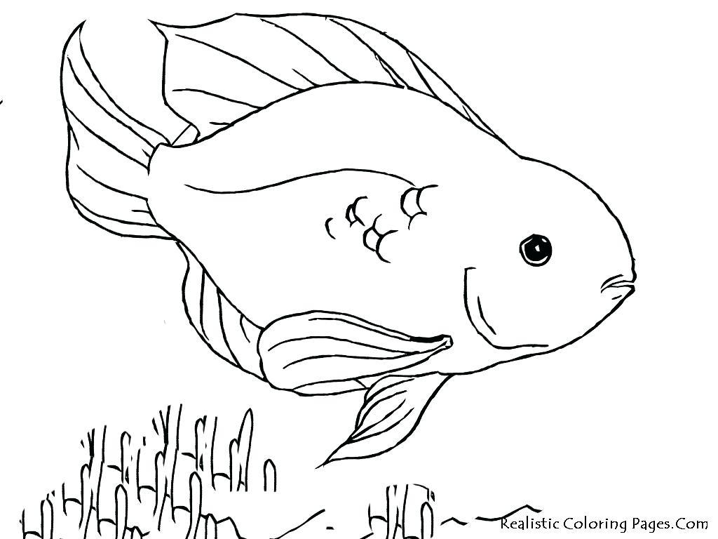 1024x768 Betta Fish With Beautiful Flipper Coloring Page. Betta Fish