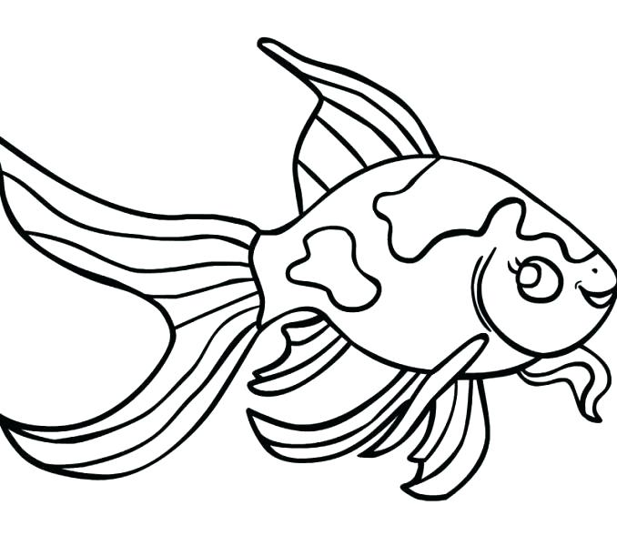 678x600 Betta Fish Coloring Pages Free Goldfish Page Best Collection