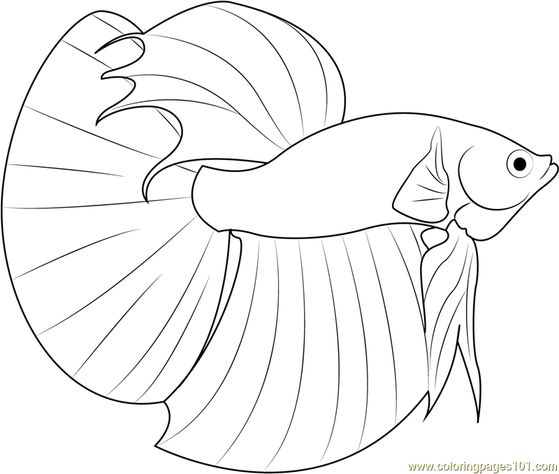 Betta Fish Drawing at GetDrawings.com | Free for personal use Betta ...