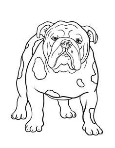 236x305 Custom Pet Portrait, Custom Charcoal Drawing, Bichon Frise, Dog