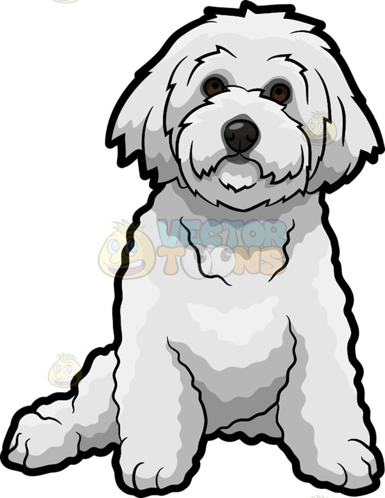 Bichon Frise Drawing at GetDrawings com | Free for personal