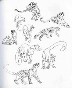 236x288 How To Draw A Tiger From A Penis Tigers, Drawings And Animal