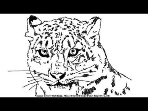 480x360 How To Draw A Cheetah A Snow Leopard Head Big Cats Yzarts