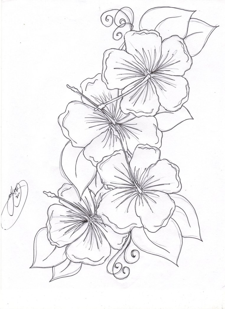 762x1049 Coloring Pages Hawiian Flower Drawing Hawaiian Flower Line