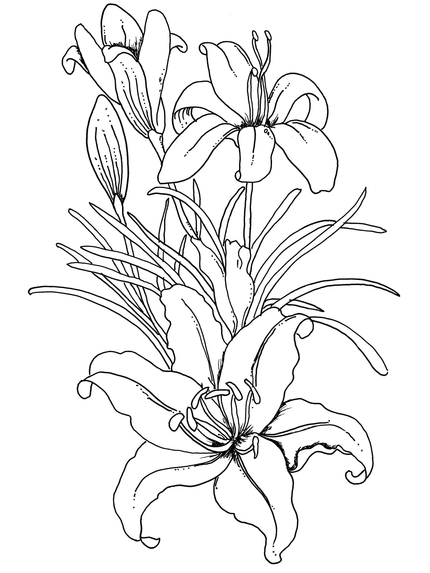 1500x2000 Flower Coloring Pages For Adults Practice Drawings Amp Ideas