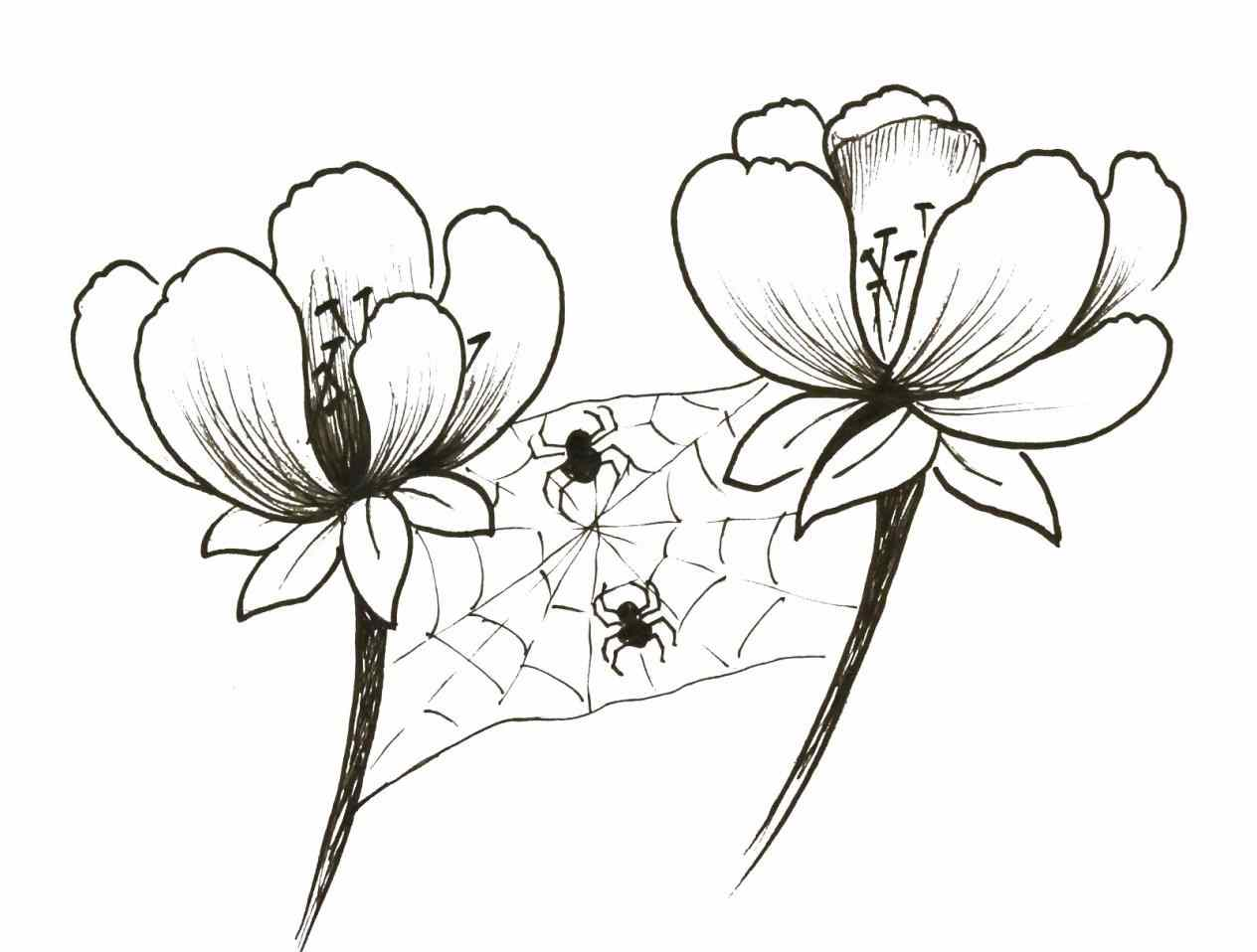 1264x958 Think Big Flowers Drawing Out Of The Box Spiders Love