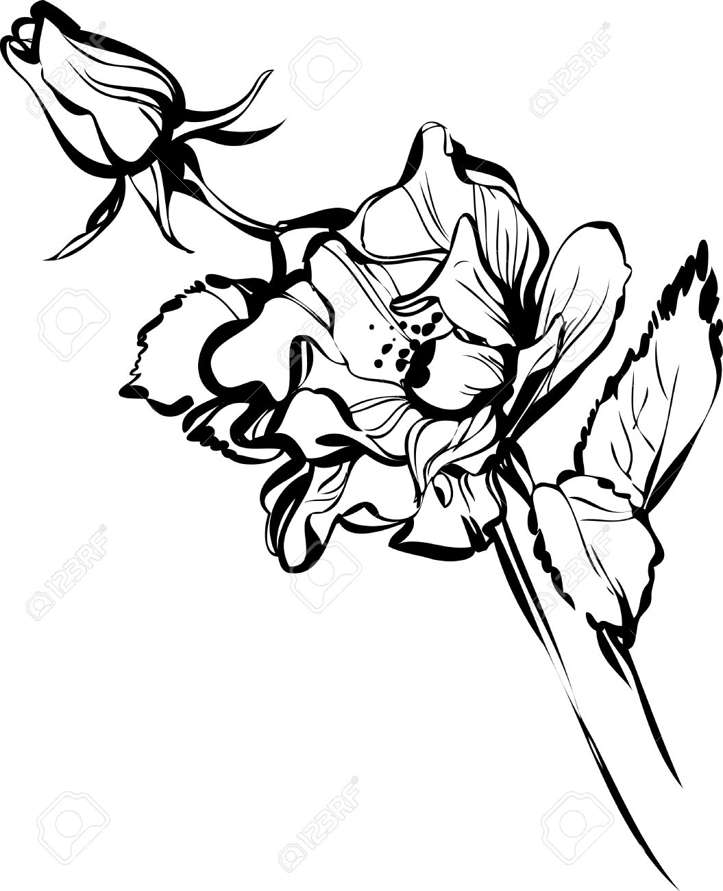 1055x1300 Black And White Drawing Of A Flower Bud Of A Beautiful Royalty