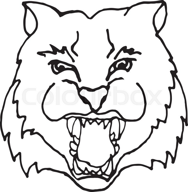 783x800 Hand Draw Head Screaming Tiger With Big Teeth In Black And White