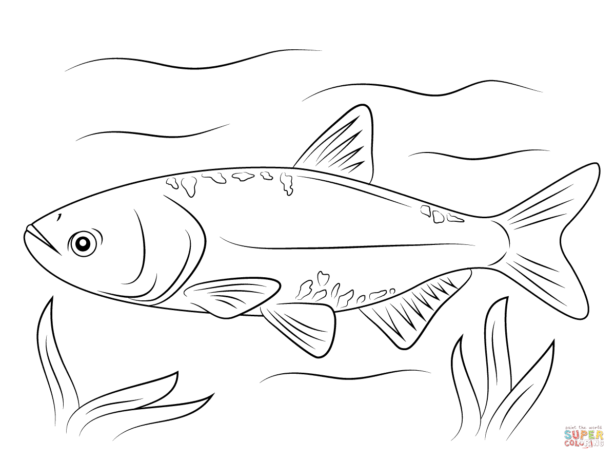 1199x894 Bighead Carp Coloring Page Free Printable Coloring Pages