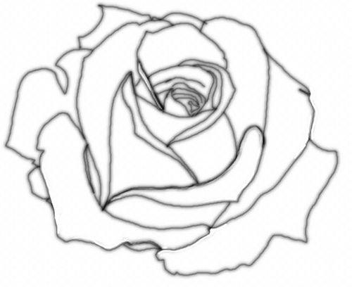 Big Rose Drawing