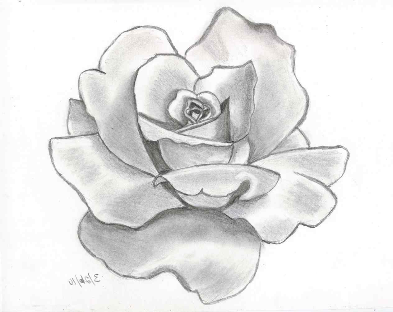 1264x1002 Hearts Big Rose Pencil And In Color Vine Clipart Black Vine