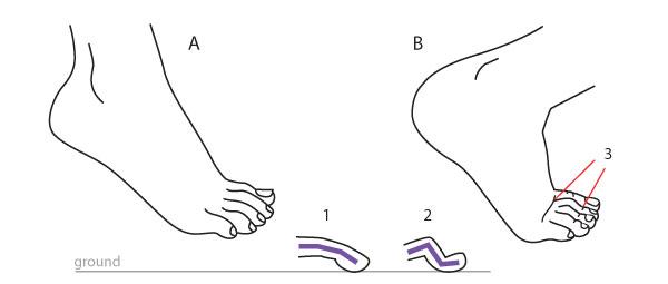 600x255 Human Anatomy Fundamentals How To Draw Feet