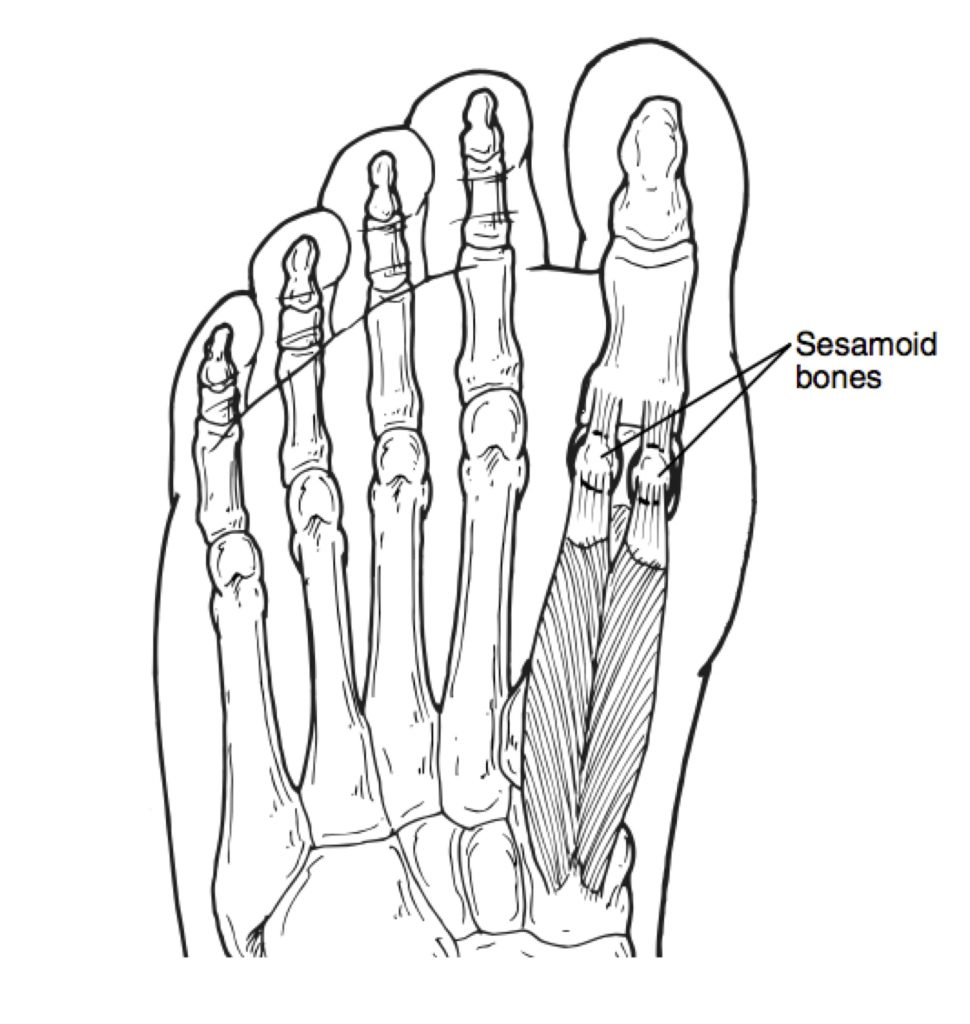 970x1024 Sesamoid Stress Fractures, What Runners Should Know Doc