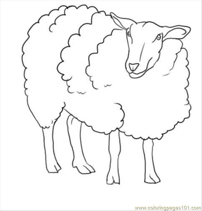 Bighorn Sheep Drawing