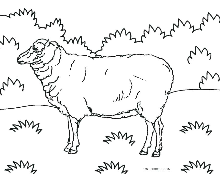 Bighorn Sheep Drawing at GetDrawings