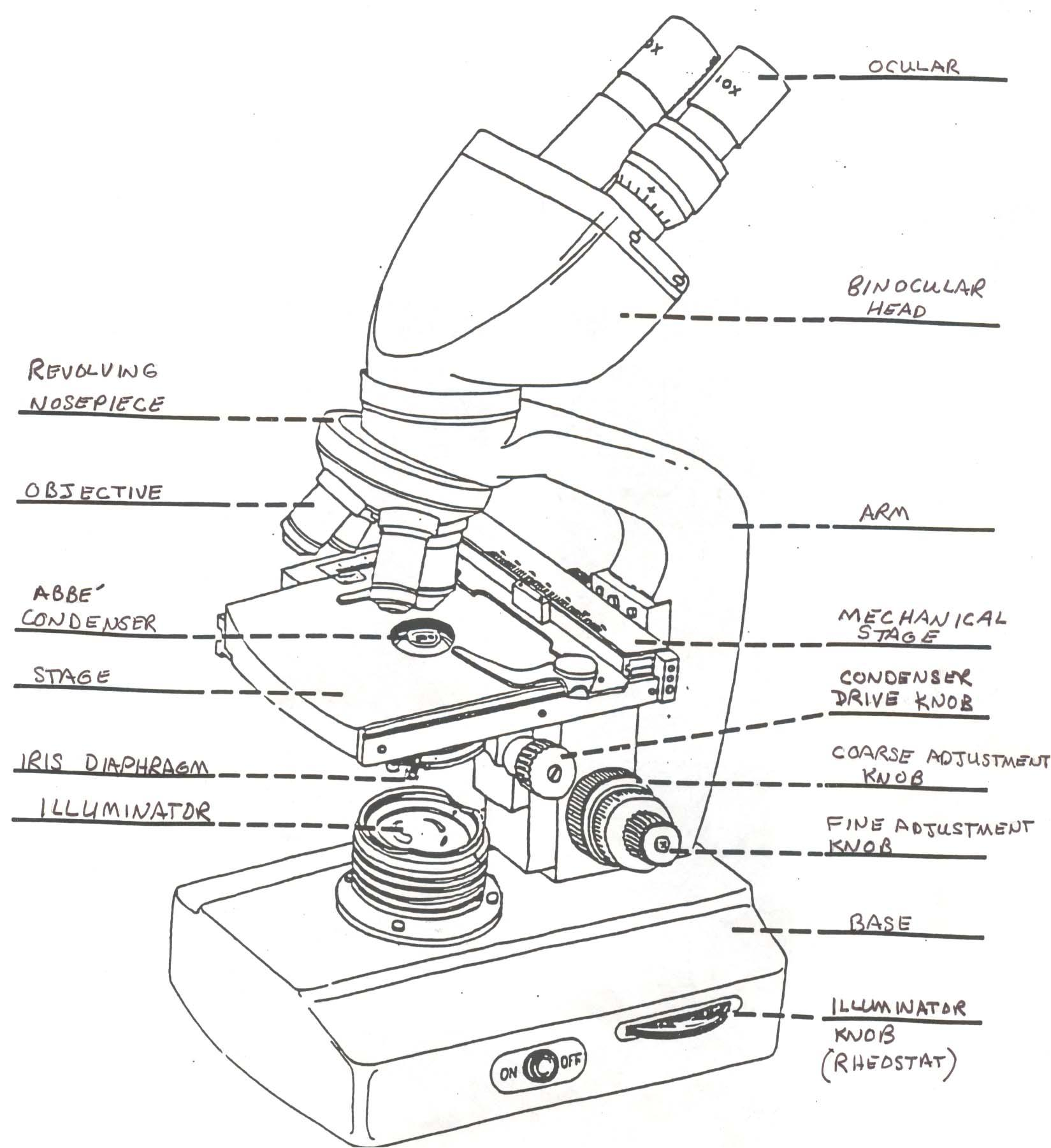Binocular microscope drawing at getdrawings free for personal 1649x1801 microscope labeling worksheet worksheets for all download and ccuart Image collections