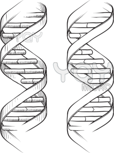 381x512 Dna Double Helix Hennatattoos Tattoo, Dna Tattoo