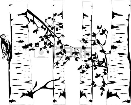 Birch Tree Drawing