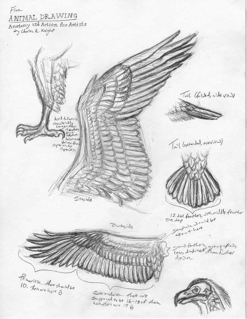 786x1017 Bird Anatomy Studies By Canis Ferox