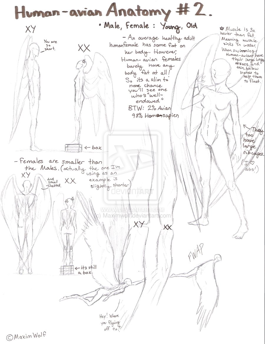 900x1169 Human Avian Anatomy No.2 By