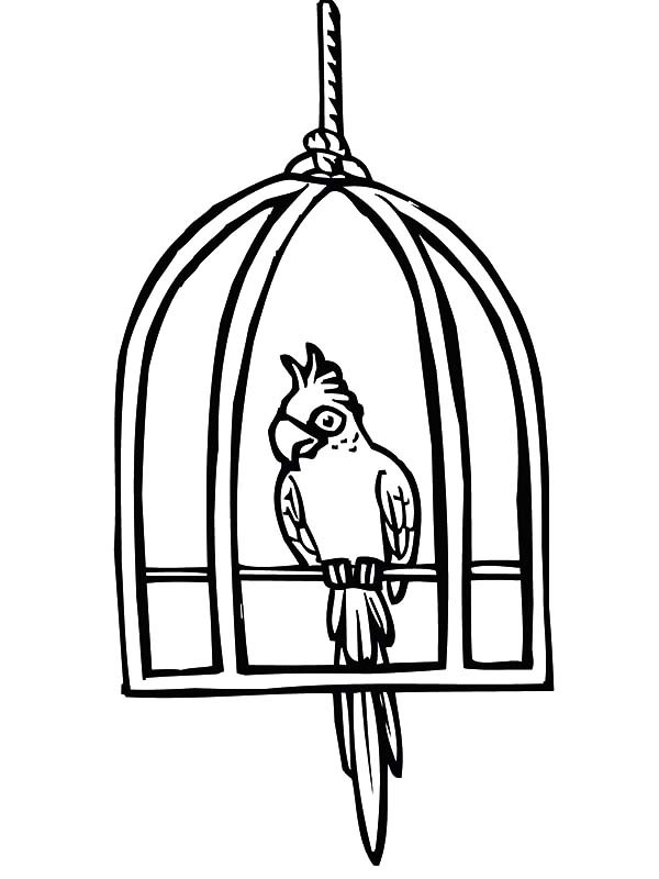 600x800 Parrot Cute Bird Cage Coloring Pages Best Place To Color