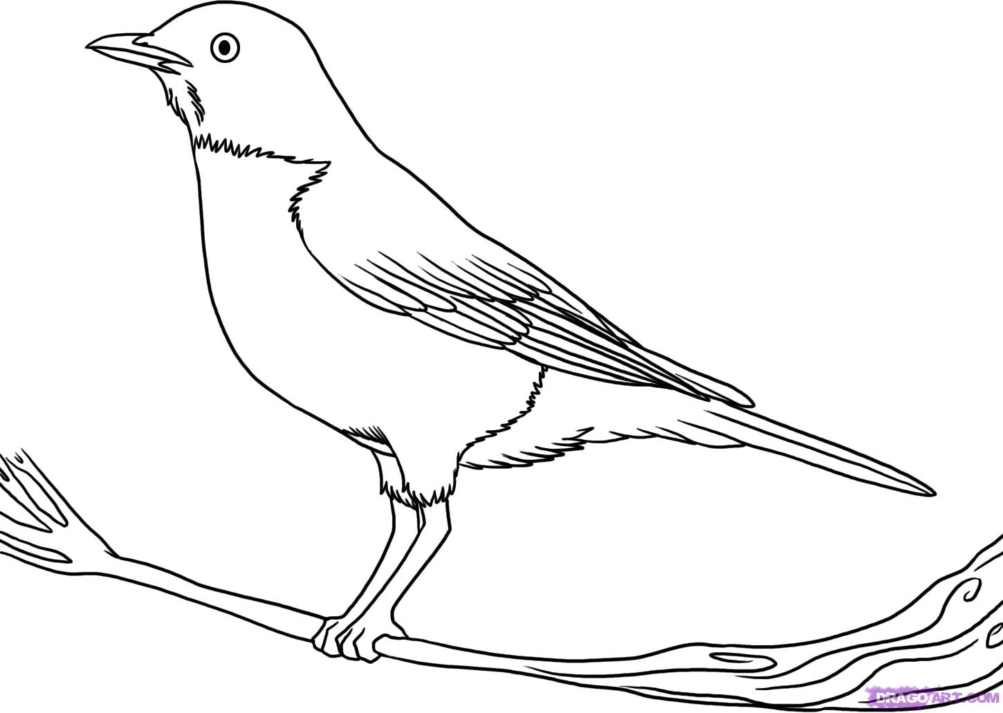 1450x1031 Outline Drawing Of A Bird